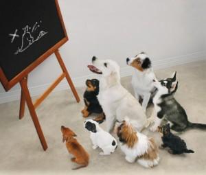 trainingdogs width=